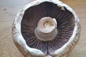 Portobello Pilz säubern